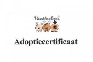 adoptiecertificaat