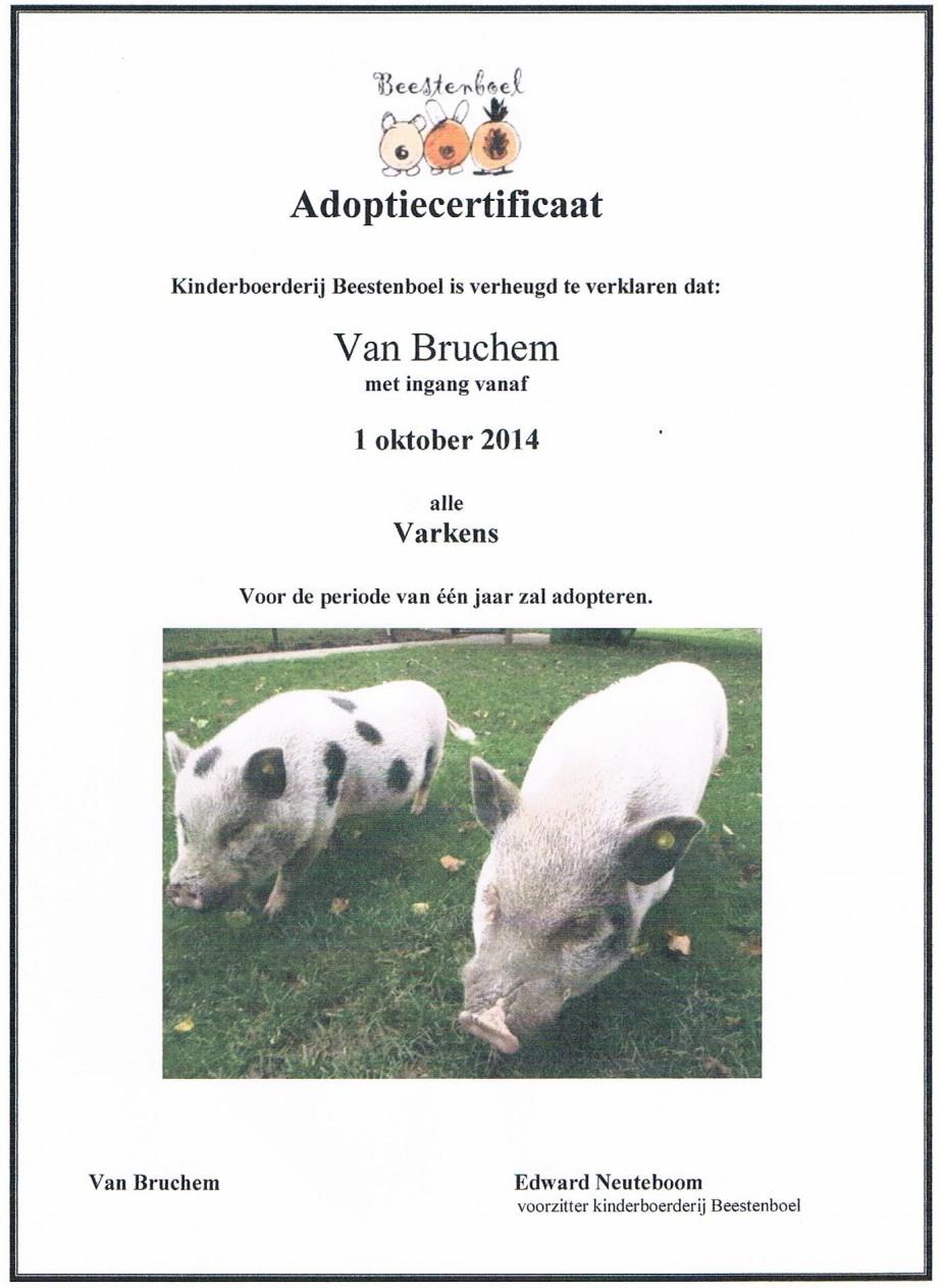 adoptie varkens